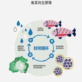 城市家庭陽臺 養魚種菜 魚菜共生系統