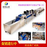 果蔬清洗階梯風乾分選生產線(A)
