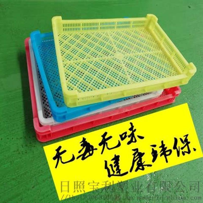 塑料单冻器烘干盘晾晒托盘浅筐蝴蝶面海参蓝莓枸杞盘