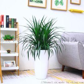 武汉家庭植物租摆写字楼花卉