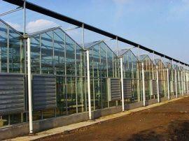 玻璃大棚建设,玻璃连栋温室,智能玻璃温室建设