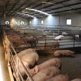 养猪场消毒除臭机 一机三用还能降温