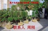 蘇州別墅綠化 庭院景觀綠化工程 別墅苗木培育基地