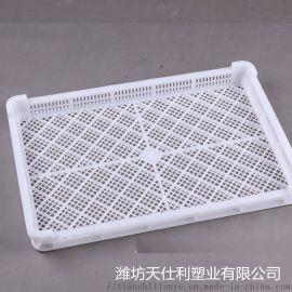单冻盘  塑料单冻盘 山东塑料单冻筐厂家