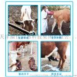溢佳同惠2.5%繁殖母牛专用预混料/母牛预混料/