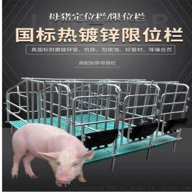 全复合母猪产床-双体母猪分娩床-养猪设备
