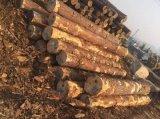 樟子松烘干防腐 樟子松防腐木 厂家大量供应樟子松木板材 2300