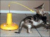 猫猫玩具-飞行鼠