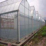邯郸诚汇供应单栋塑料大棚 薄膜大棚 蔬菜棚