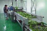 山东华钢蔬菜清洗风干流水线,全自动大枣气泡清洗机
