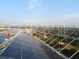 花卉陽光板溫室大棚