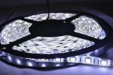 发光吸塑字   LED软灯条