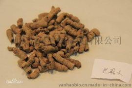 巴戟天提取物Morinda Root Extract