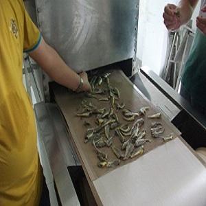 海鱼微波烘干设备 隧道式海鱼干燥设备 专业厂家定做海鲜鱼类干燥机 价格