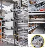 H型4层蛋鸡养殖设备