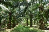 SSDHO 0109印度尼西亞棕櫚原油和潤滑油