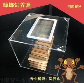 蟑螂饲养缸