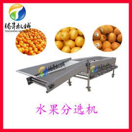 厂家供水果清洗分选机 江门柑橘清洗大小选果分选机