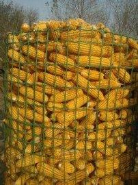 沈阳圈玉米镀锌电焊网厂家/镀锌电焊网价格/圈玉米网