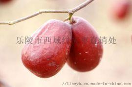 爆款热销新疆红枣厂家电商货源