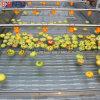 鑫富供应,苹果清洗机,蔬菜清洗机,菠菜清洗机