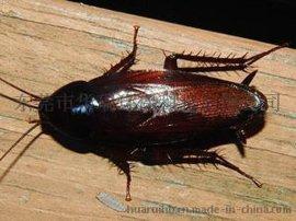 东莞杀虫灭鼠,除四害,白蚁防治,杀臭虫,灭蟑螂,灭蚊蝇