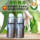 大量供應天然植物單方桉葉精油 檸檬桉油 蚊尤加利日化手工皁原料