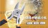 包邮NANYE南冶XK-125,五寸斜口剪钳生产加工厂家直销