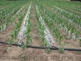 大棚滴灌技術蔬菜滴灌迷宮式滴灌帶貼片式滴灌帶