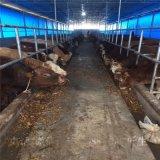 牛場卷簾布廠家定製和安裝步驟