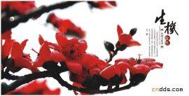 广州大图复印标书装订画册海报单张印刷诚信手提袋印刷深圳慧星印刷厂