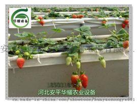 河北省温室大棚无土栽培草莓种植