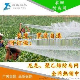 防鸟网图片果园防护网的安装方法使用技巧