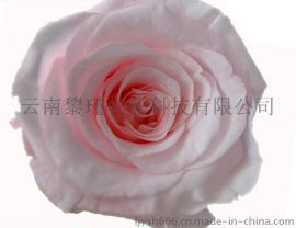 特级玫瑰出口永生花材   玫瑰DIY创意 情人节圣诞节礼物  2-3