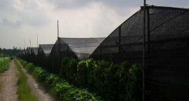 包头蔬菜大棚遮阳网 防晒专用网