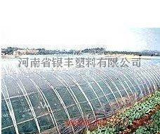 塑料棚,蔬菜棚,温室大棚