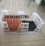 天仕利新式配蛋托用种蛋筐 塑料种蛋筐