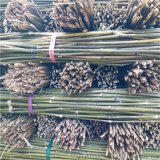 供应江西豆架杆 豆角搭架用的架杆