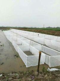 水蛭养殖技术 水蛭网箱养殖