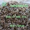 云南满泽印度辣木籽种植食用辣木子昆明哪里有卖
