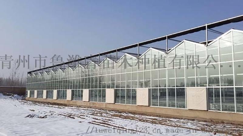 温室大棚就选山东鲁潍青-温室大棚15年质量保证