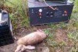 新乡电野猪机厂家,大型电野猪机价格