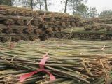 2米5菜架竹,竹竿