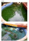 深圳锦鲤鱼池砂缸微生物过滤系统