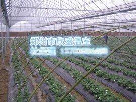 蔬菜水果智能型连栋大棚河南景观温室大棚建设销售