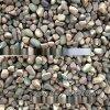 本格厂家供应机制鹅卵石 杂色铺路鹅卵石