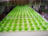 水溶膜包装机 单色双色三色四色洗衣凝珠生产线