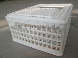 厂家  批发抗水耐磨大鸡塑料笼子
