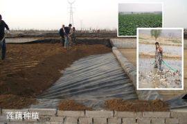 双象牌HDPE土工膜190g/㎡ 加厚塑料防水膜