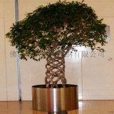 種樹不鏽鋼花盆,酒店用綠植花盆